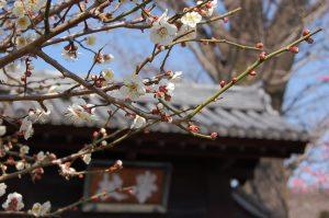 春・梅の学校門写真