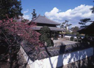 春・梅の孔子廟写真