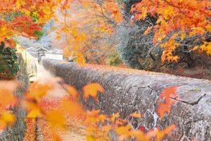 石塀と紅葉写真